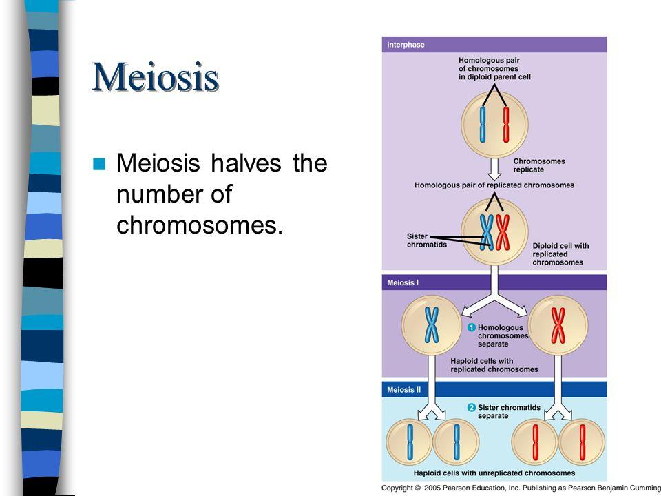 Meiosis Meiosis halves the number of chromosomes.