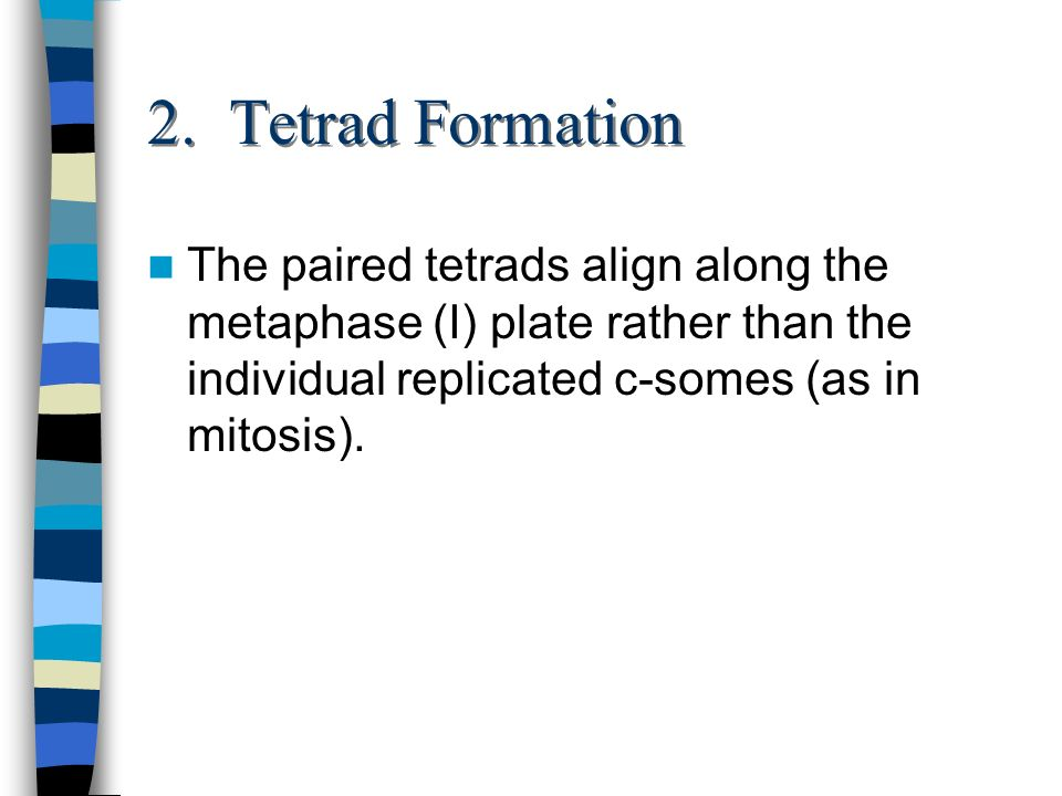 2. Tetrad Formation The paired tetrads align along the metaphase (I) plate rather than the individual replicated c-somes (as in mitosis).