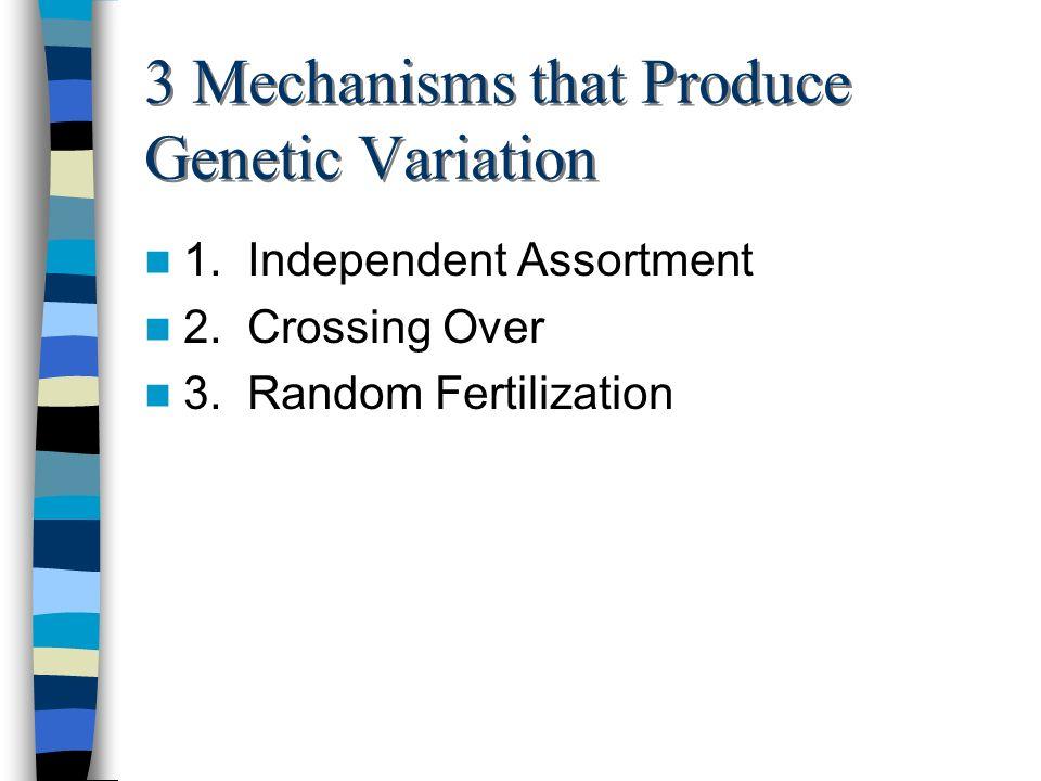 3 Mechanisms that Produce Genetic Variation 1. Independent Assortment 2. Crossing Over 3. Random Fertilization
