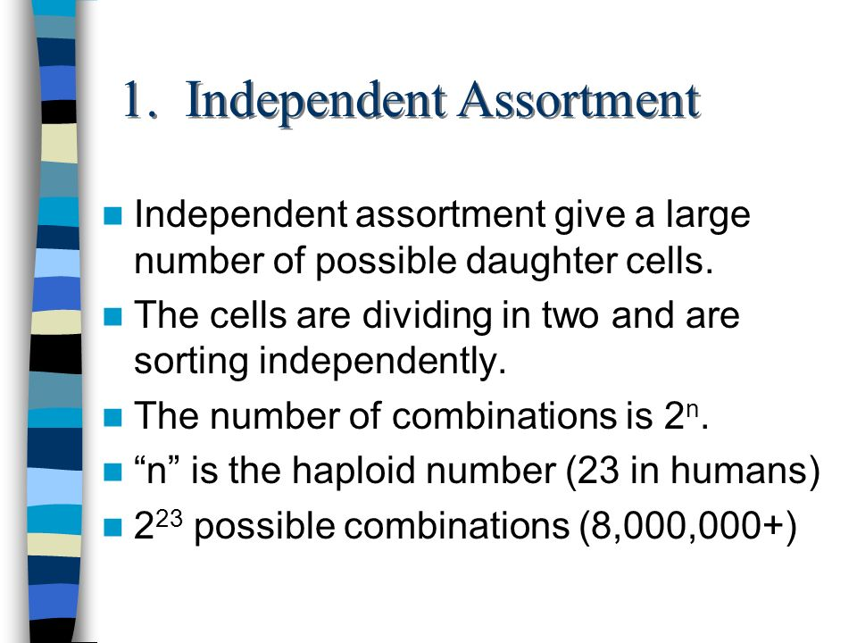 1. Independent Assortment Independent assortment give a large number of possible daughter cells. The cells are dividing in two and are sorting indepen