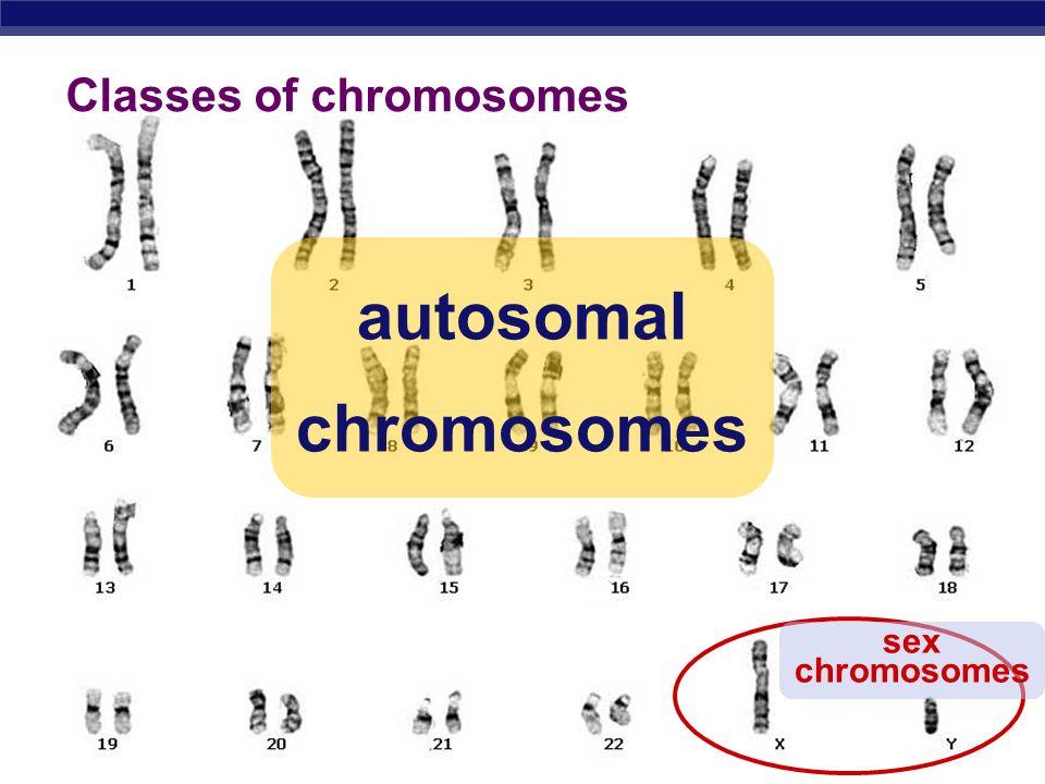 AP Biology autosomal chromosomes sex chromosomes Classes of chromosomes