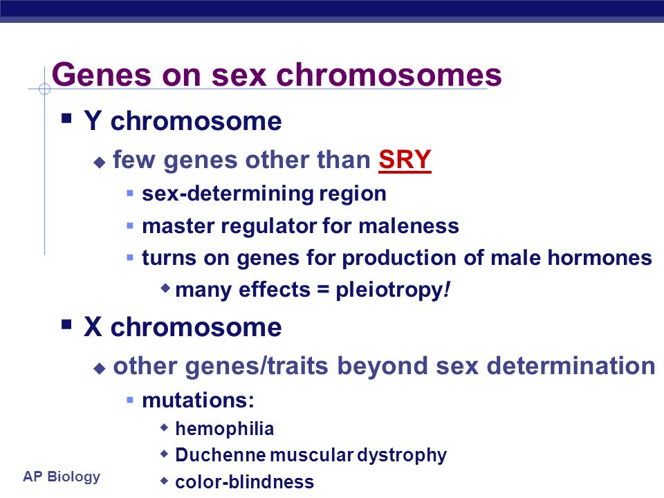 AP Biology Genes on sex chromosomes Y chromosome few genes other than SRY sex-determining region master regulator for maleness turns on genes for prod