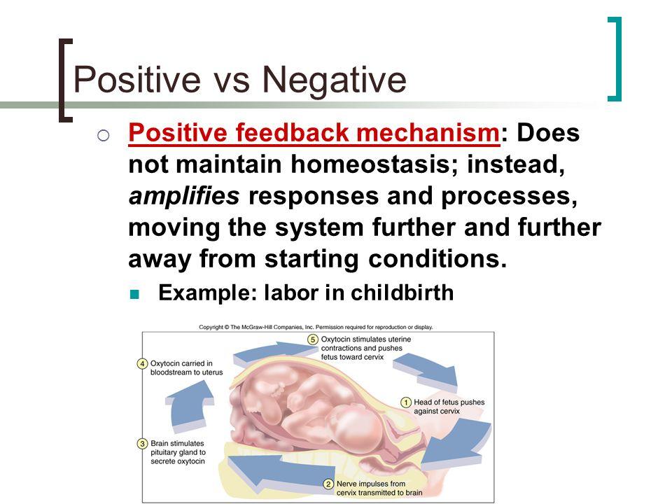 Positive Feedback Loop Childbirth Positive vs Negative