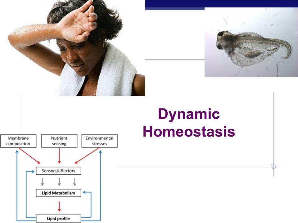AP Biology Dynamic Homeostasis