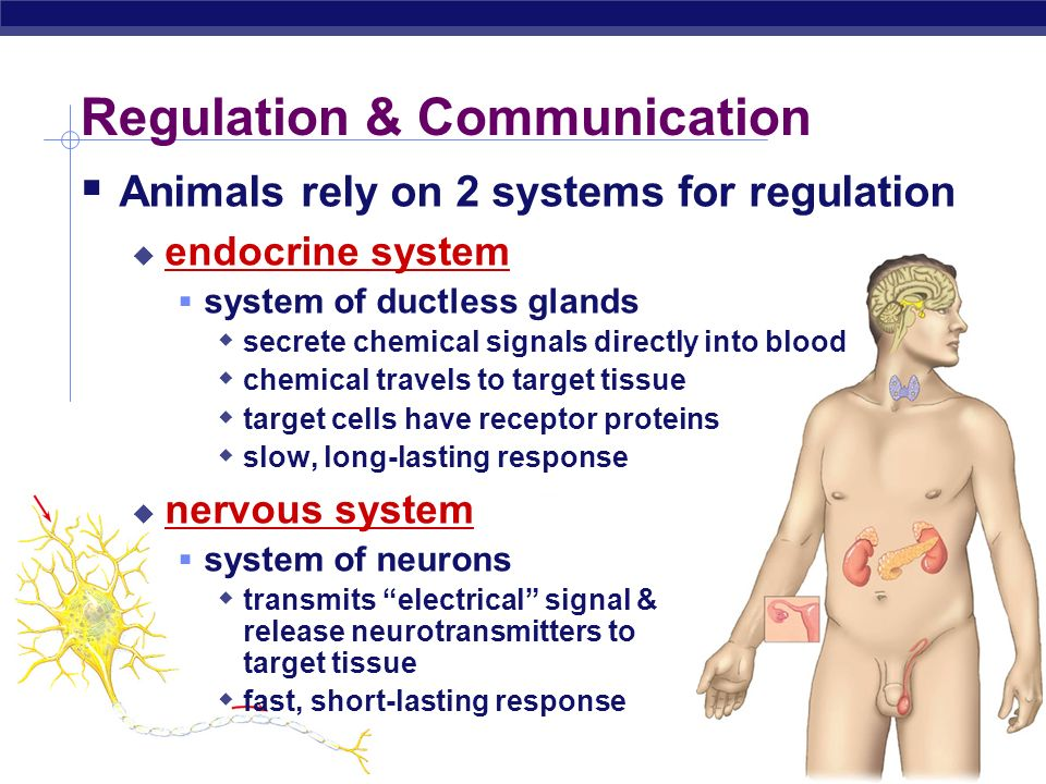 AP Biology Why are hormones needed? chemical messages from one body part to another communication needed to coordinate whole body daily homeostasis &