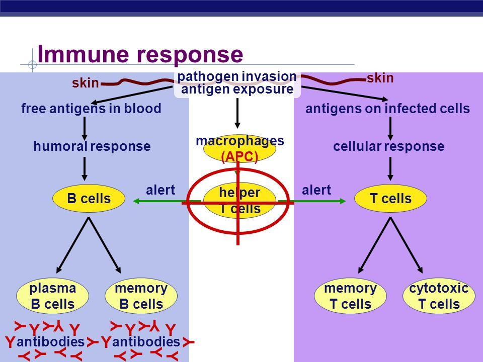 ap bio essay immune system