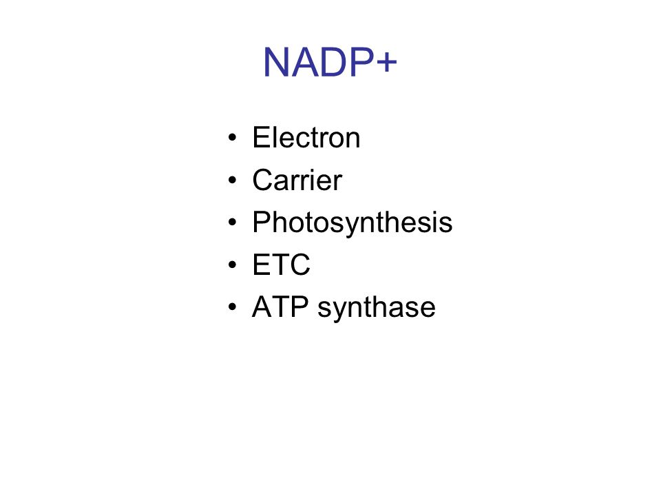 NADP+ Electron Carrier Photosynthesis ETC ATP synthase