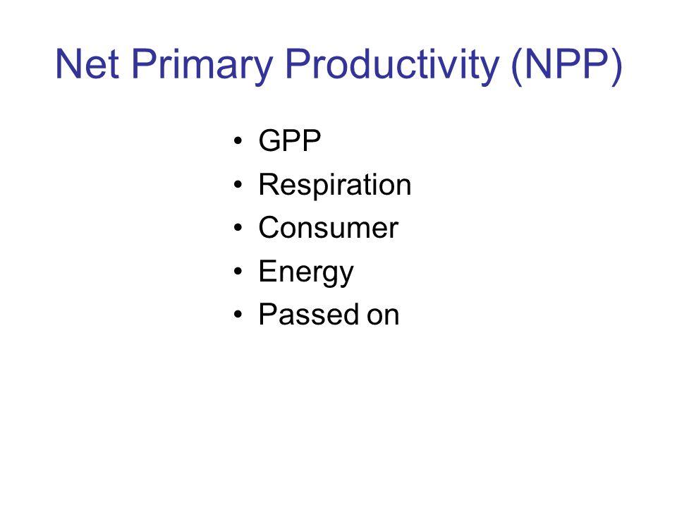 Net Primary Productivity (NPP) GPP Respiration Consumer Energy Passed on
