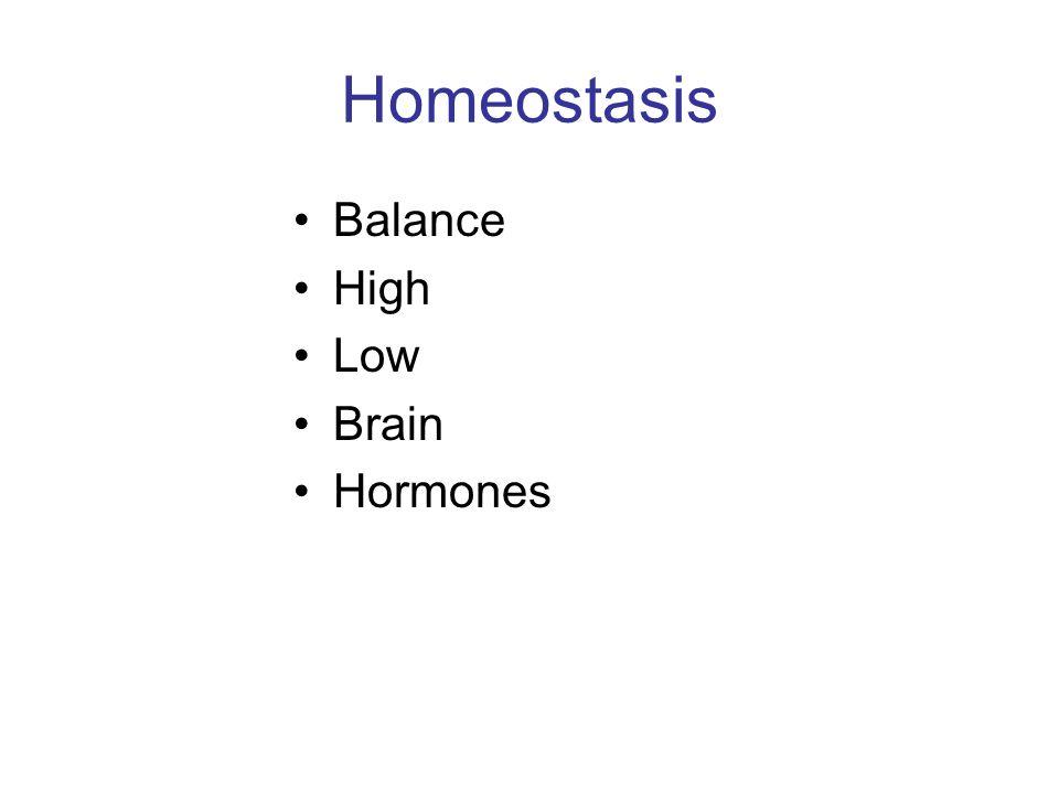 Homeostasis Balance High Low Brain Hormones