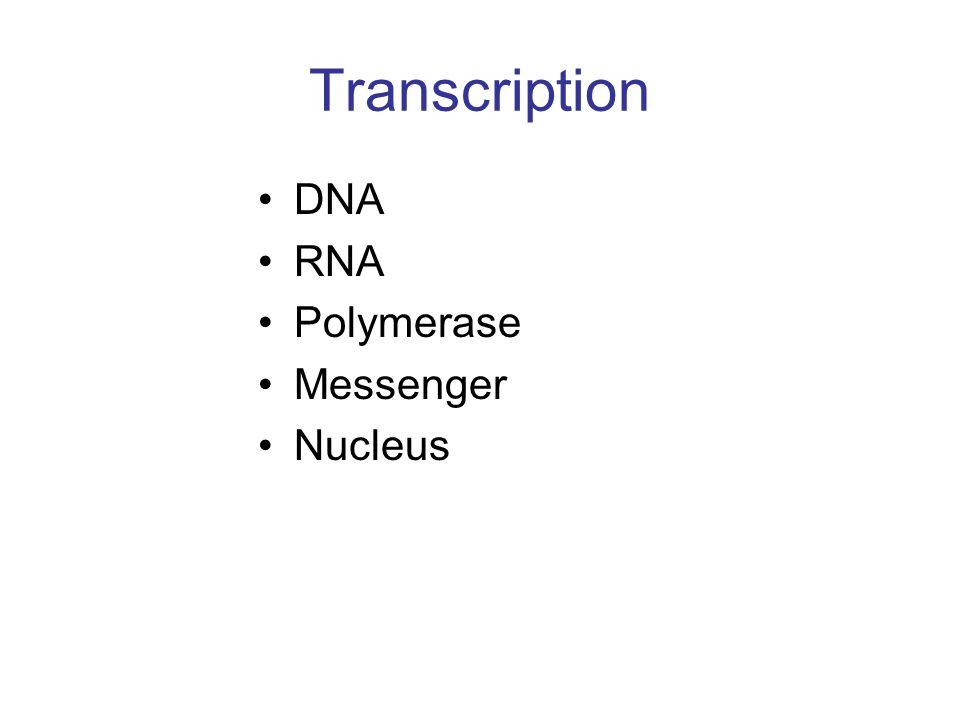 Transcription DNA RNA Polymerase Messenger Nucleus