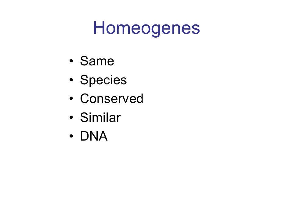 Homeogenes Same Species Conserved Similar DNA