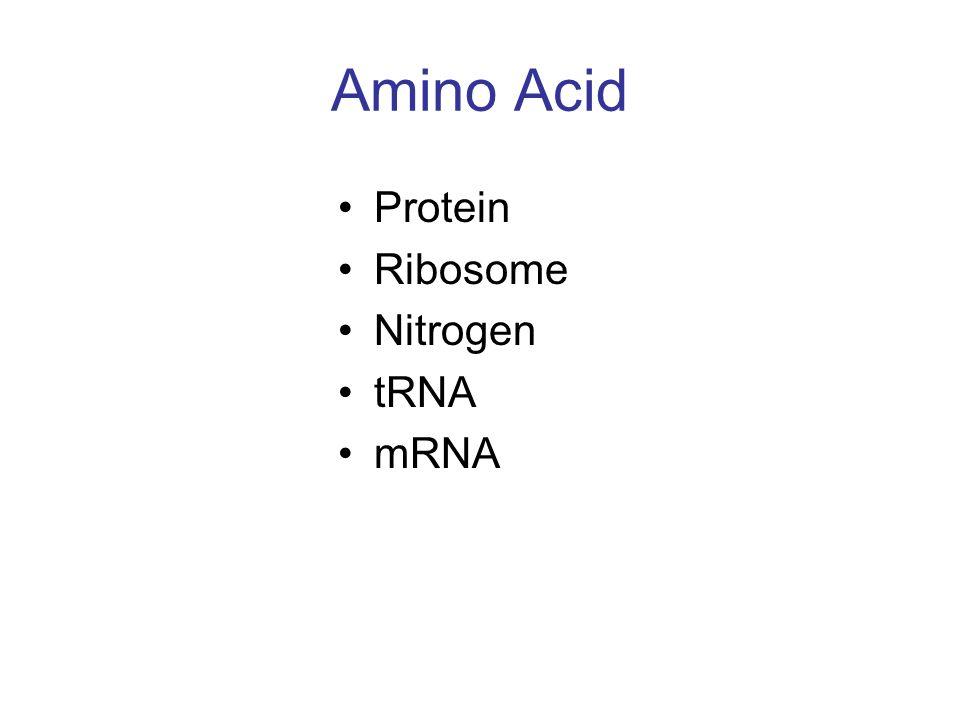 Amino Acid Protein Ribosome Nitrogen tRNA mRNA