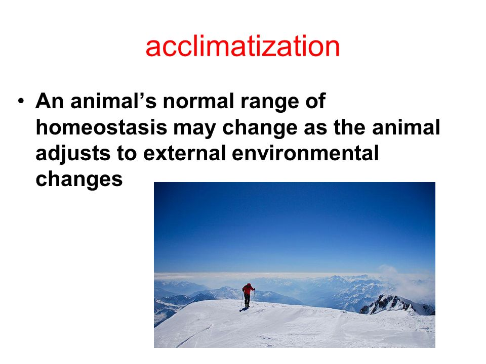 acclimatization An animals normal range of homeostasis may change as the animal adjusts to external environmental changes
