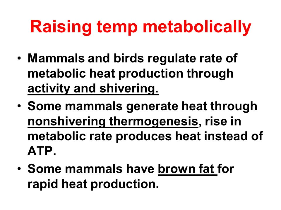 Raising temp metabolically Mammals and birds regulate rate of metabolic heat production through activity and shivering. Some mammals generate heat thr