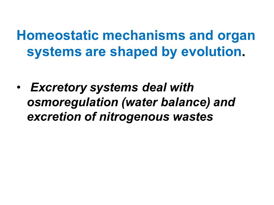 Homeostatic mechanisms and organ systems are shaped by evolution. Excretory systems deal with osmoregulation (water balance) and excretion of nitrogen