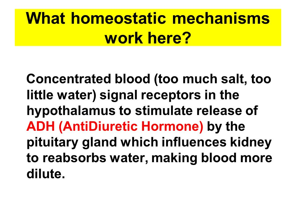 What homeostatic mechanisms work here? Concentrated blood (too much salt, too little water) signal receptors in the hypothalamus to stimulate release