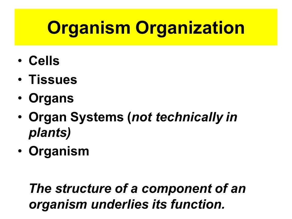 Organism Organization Cells Tissues Organs Organ Systems (not technically in plants) Organism The structure of a component of an organism underlies it