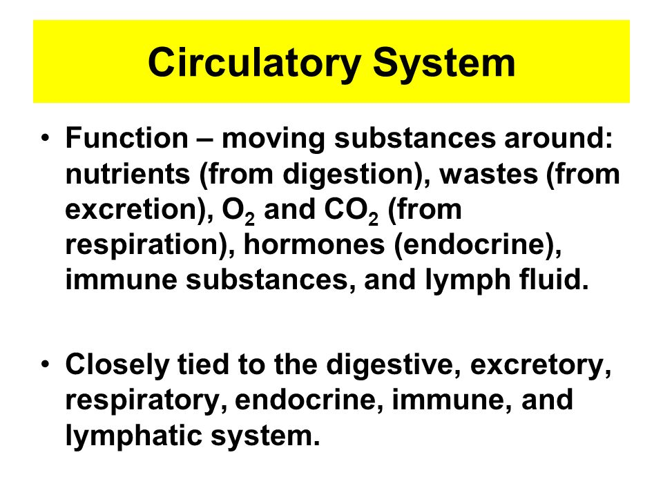 Circulatory System Function – moving substances around: nutrients (from digestion), wastes (from excretion), O 2 and CO 2 (from respiration), hormones