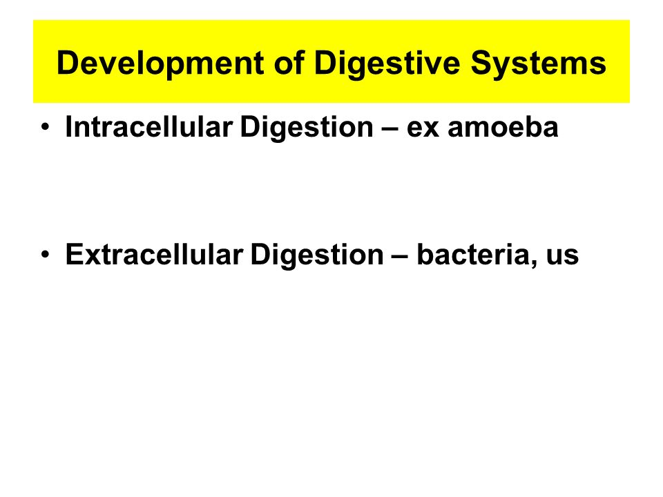 Development of Digestive Systems Intracellular Digestion – ex amoeba Extracellular Digestion – bacteria, us