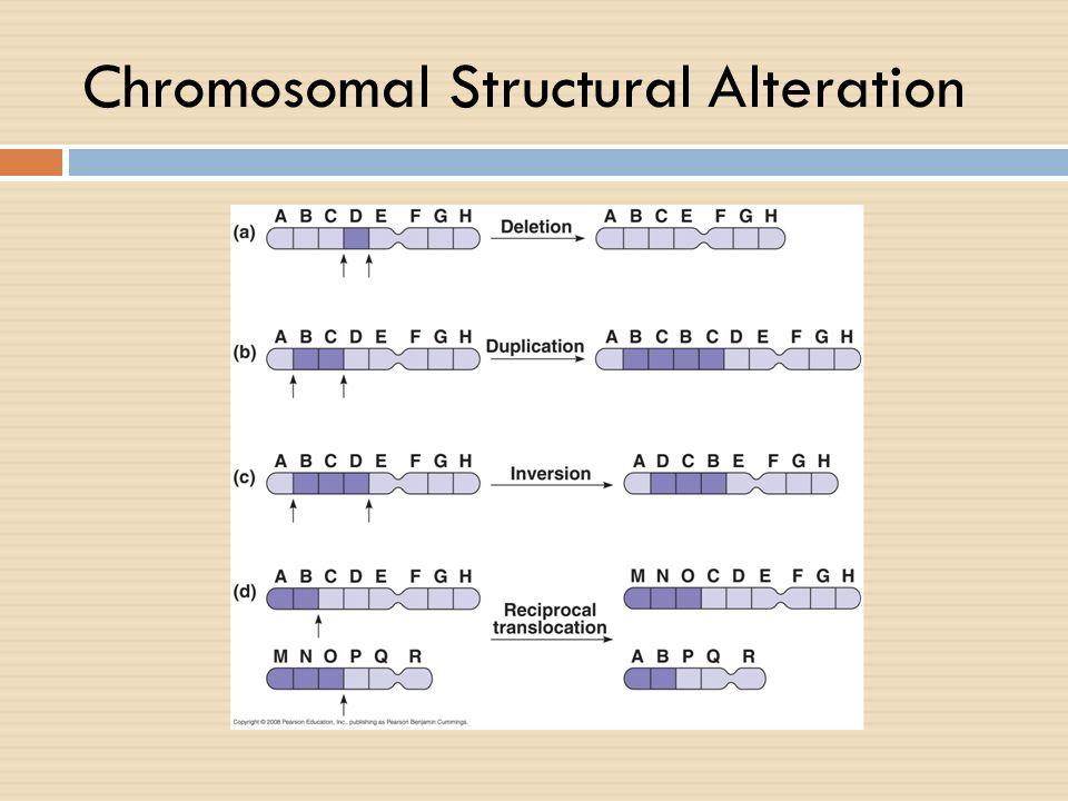 Chromosomal Structural Alteration