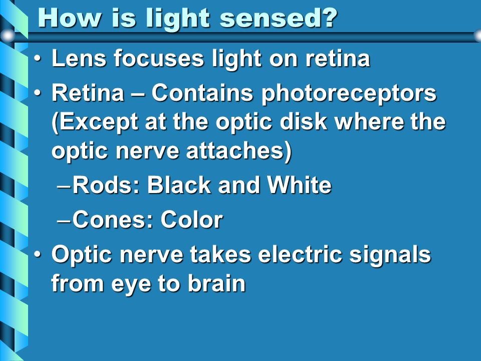 How is light sensed? Lens focuses light on retinaLens focuses light on retina Retina – Contains photoreceptors (Except at the optic disk where the opt