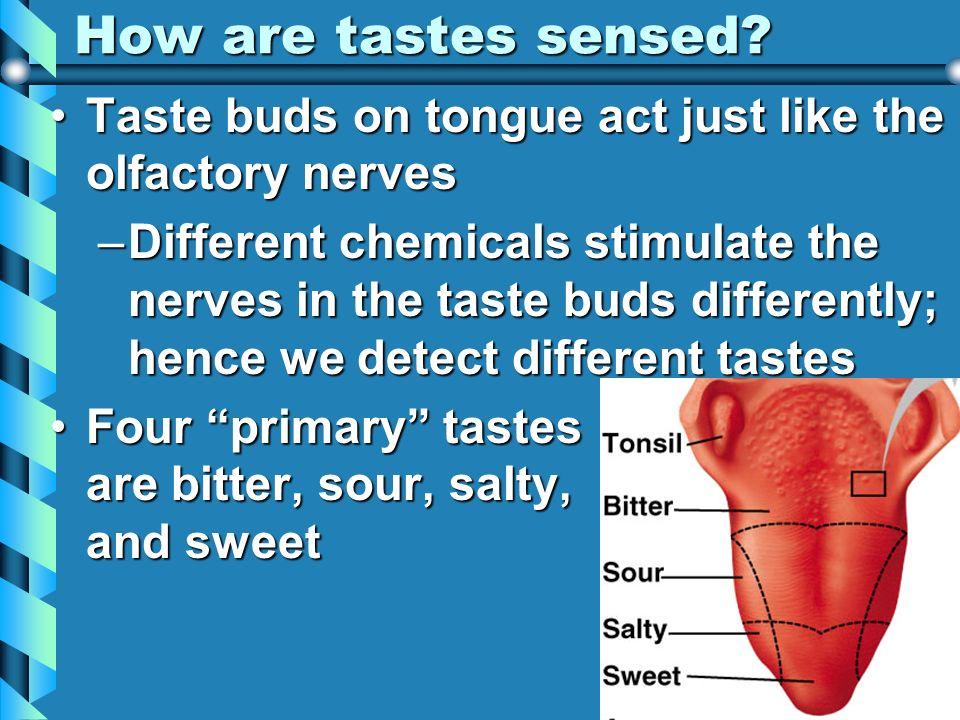 How are tastes sensed? Taste buds on tongue act just like the olfactory nervesTaste buds on tongue act just like the olfactory nerves –Different chemi