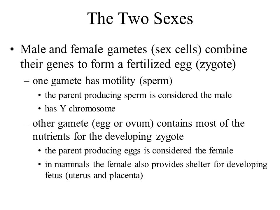 The Two Sexes Male and female gametes (sex cells) combine their genes to form a fertilized egg (zygote) –one gamete has motility (sperm) the parent pr