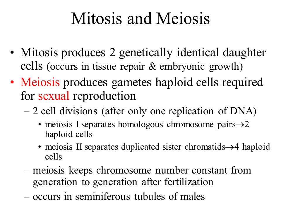 Mitosis and Meiosis Mitosis produces 2 genetically identical daughter cells (occurs in tissue repair & embryonic growth) Meiosis produces gametes hapl