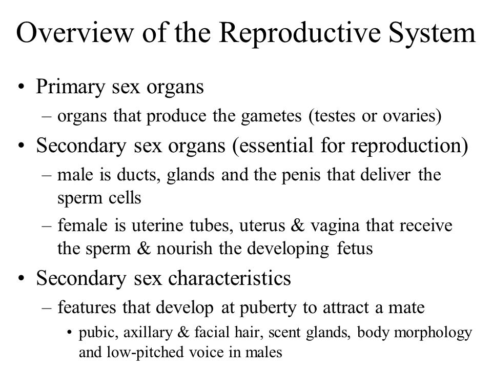 Overview of the Reproductive System Primary sex organs –organs that produce the gametes (testes or ovaries) Secondary sex organs (essential for reprod