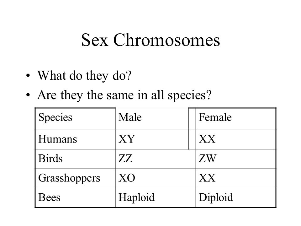 Sex Chromosomes What do they do. Are they the same in all species.