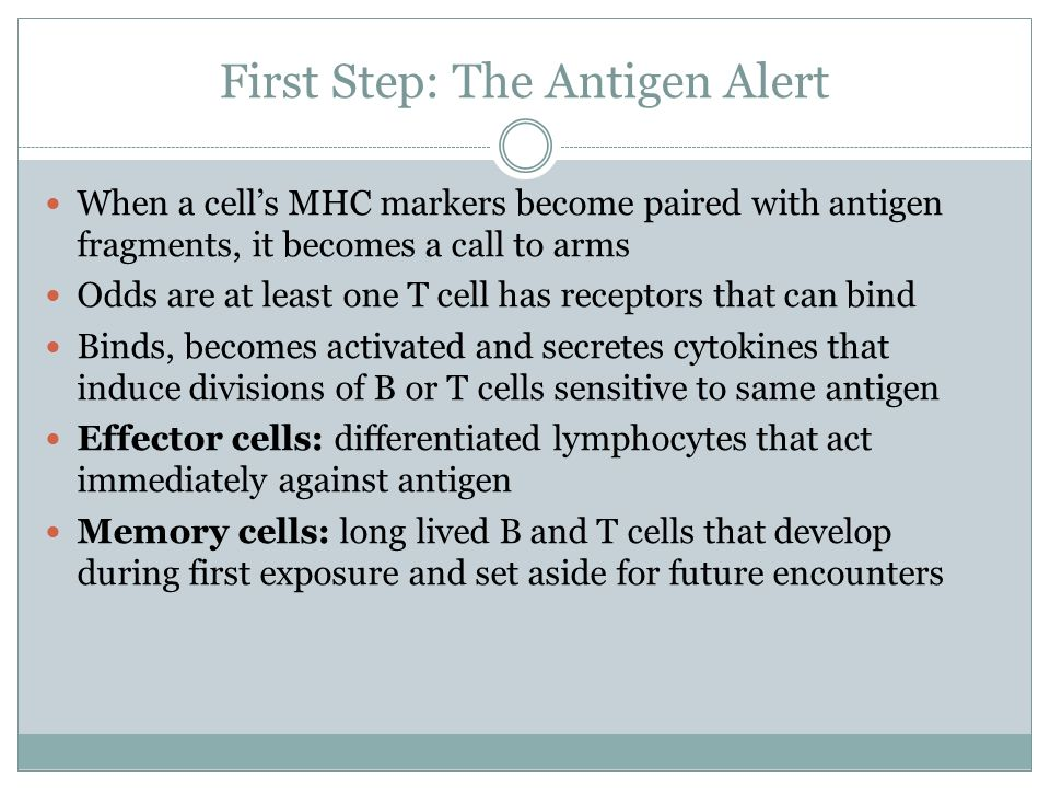 First Step: The Antigen Alert When a cells MHC markers become paired with antigen fragments, it becomes a call to arms Odds are at least one T cell ha