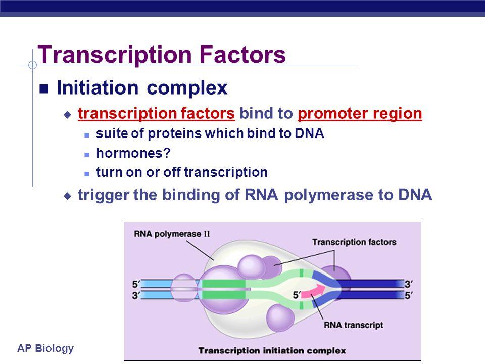AP Biology Which gene is read? Promoter region binding site before beginning of gene TATA box binding site binding site for RNA polymerase & transcrip