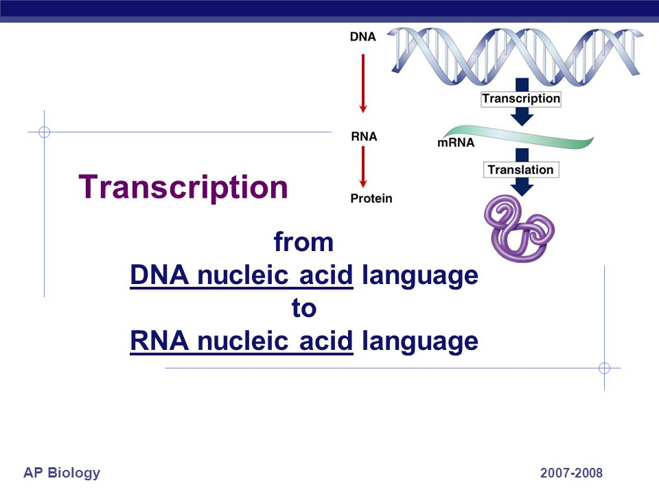 AP Biology 2007-2008 Transcription from DNA nucleic acid language to RNA nucleic acid language