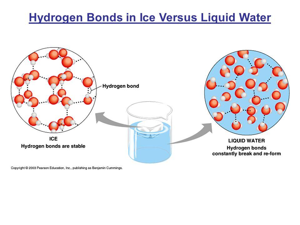 Hydrogen Bonds in Ice Versus Liquid Water