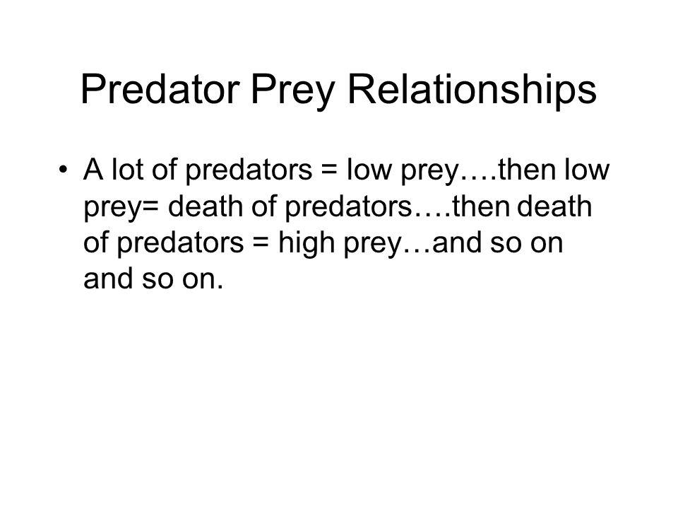 Predator Prey Relationships A lot of predators = low prey….then low prey= death of predators….then death of predators = high prey…and so on and so on.