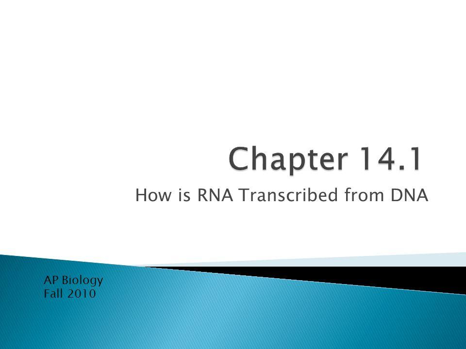 It takes three classes of RNA to synthesize proteins Messenger RNA (mRNA) Ribosomal RNA (rRNA) Transfer RNA (tRNA)