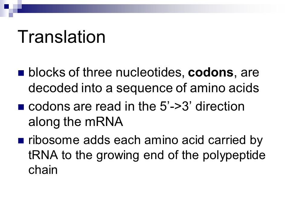 Translation blocks of three nucleotides, codons, are decoded into a sequence of amino acids codons are read in the 5->3 direction along the mRNA ribos