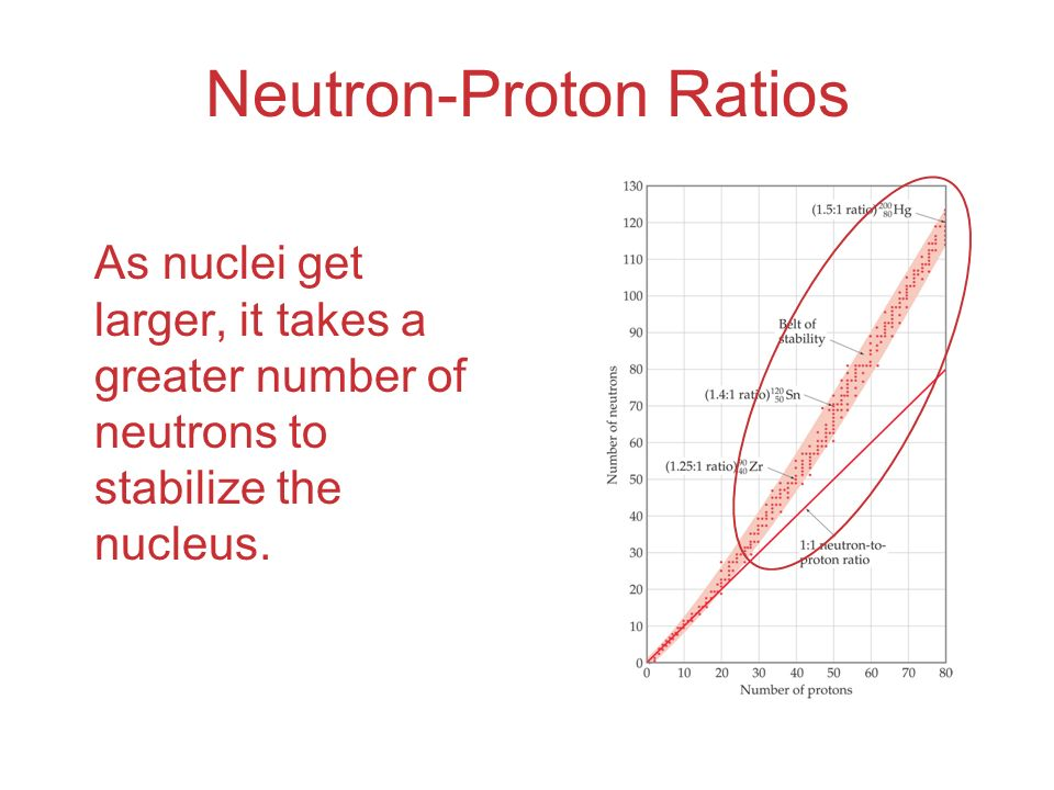 Neutron-Proton Ratios As nuclei get larger, it takes a greater number of neutrons to stabilize the nucleus.