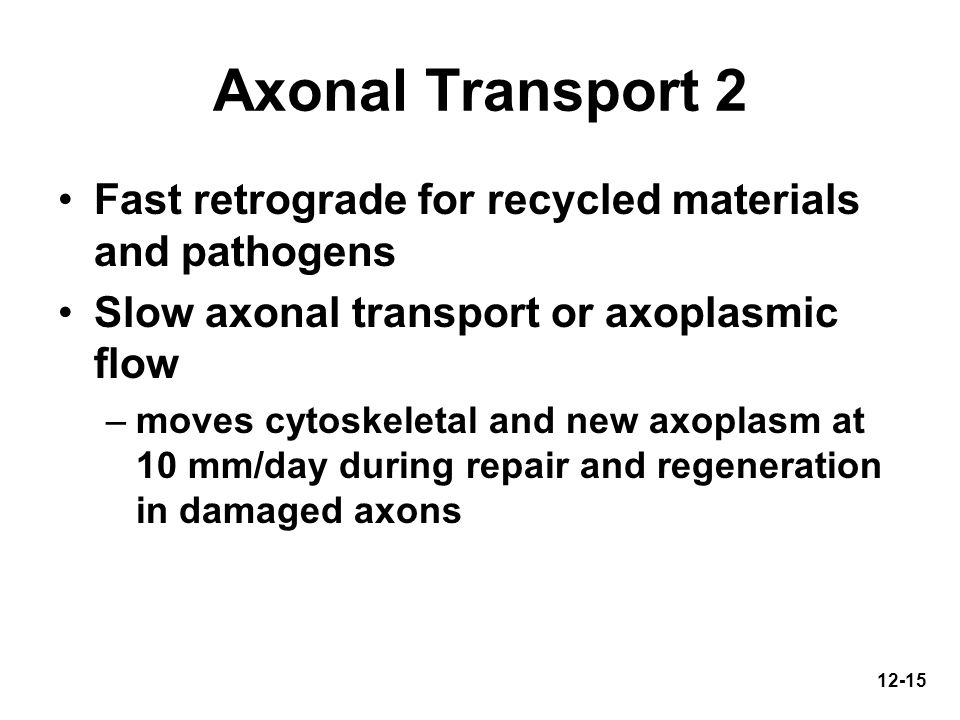 12-15 Axonal Transport 2 Fast retrograde for recycled materials and pathogens Slow axonal transport or axoplasmic flow –moves cytoskeletal and new axo