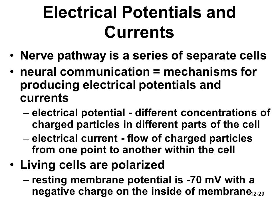 12-29 Electrical Potentials and Currents Nerve pathway is a series of separate cells neural communication = mechanisms for producing electrical potent