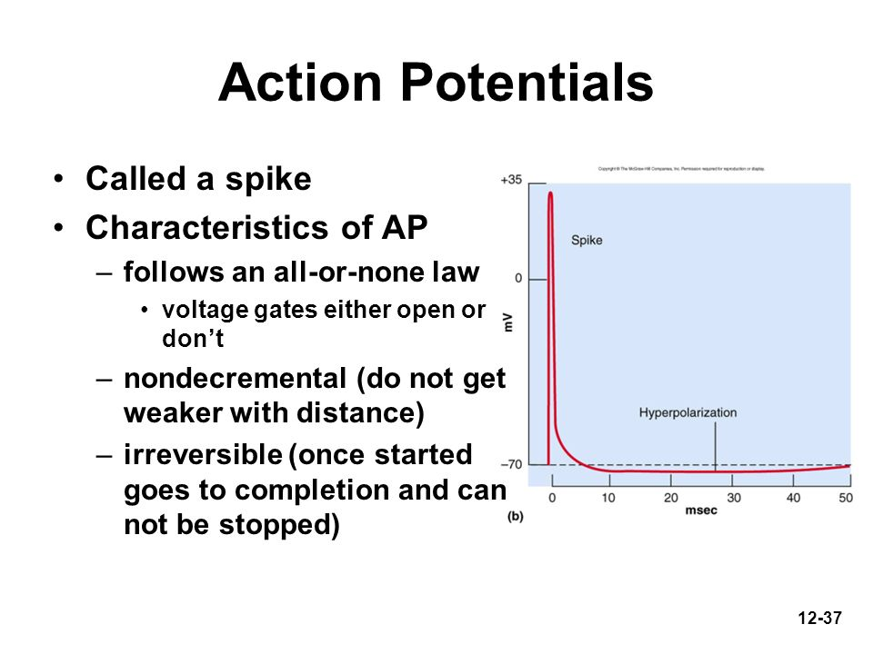 12-37 Action Potentials Called a spike Characteristics of AP –follows an all-or-none law voltage gates either open or dont –nondecremental (do not get