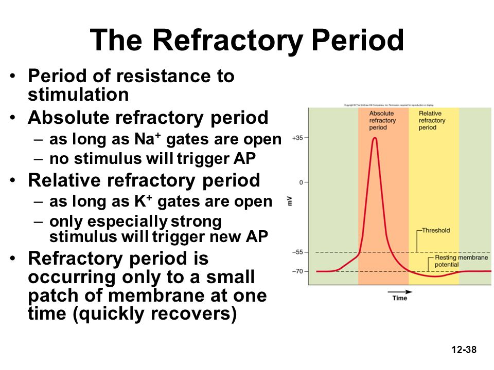 12-38 The Refractory Period Period of resistance to stimulation Absolute refractory period –as long as Na + gates are open –no stimulus will trigger A