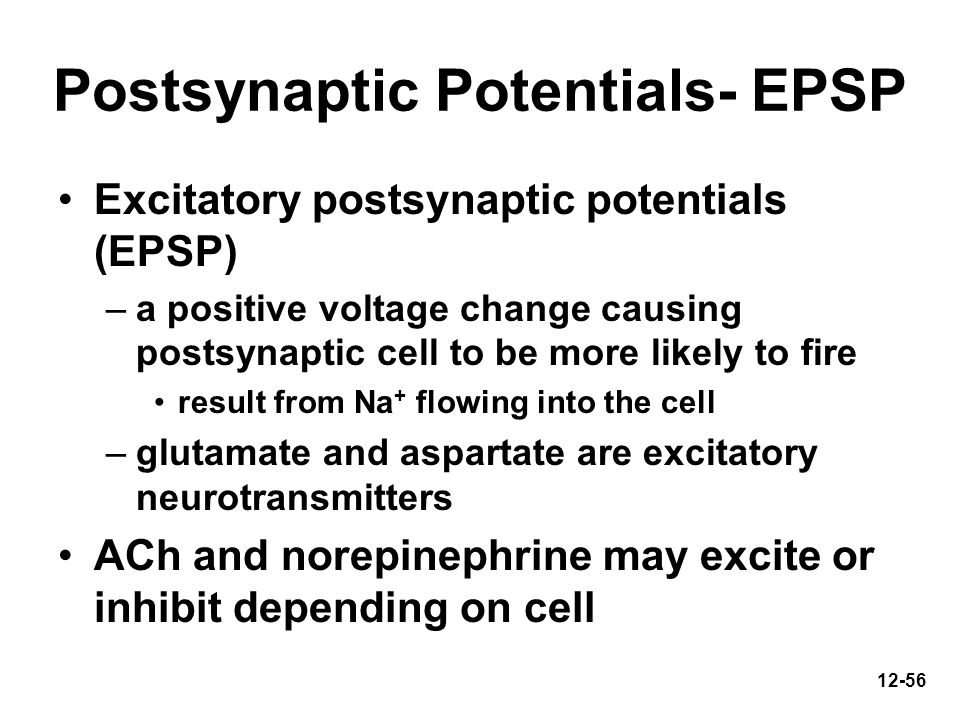 12-56 Postsynaptic Potentials- EPSP Excitatory postsynaptic potentials (EPSP) –a positive voltage change causing postsynaptic cell to be more likely t