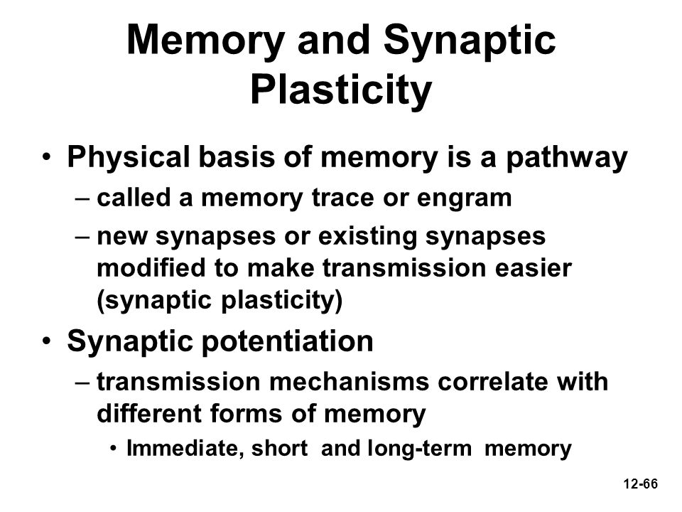 12-66 Memory and Synaptic Plasticity Physical basis of memory is a pathway –called a memory trace or engram –new synapses or existing synapses modifie