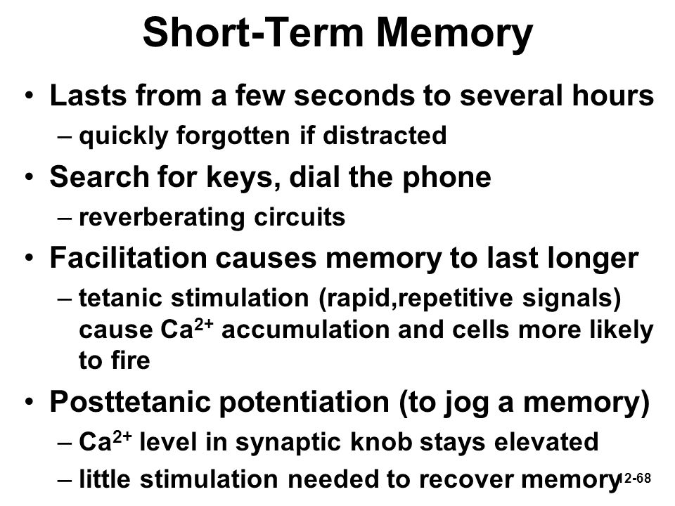 12-68 Short-Term Memory Lasts from a few seconds to several hours –quickly forgotten if distracted Search for keys, dial the phone –reverberating circ