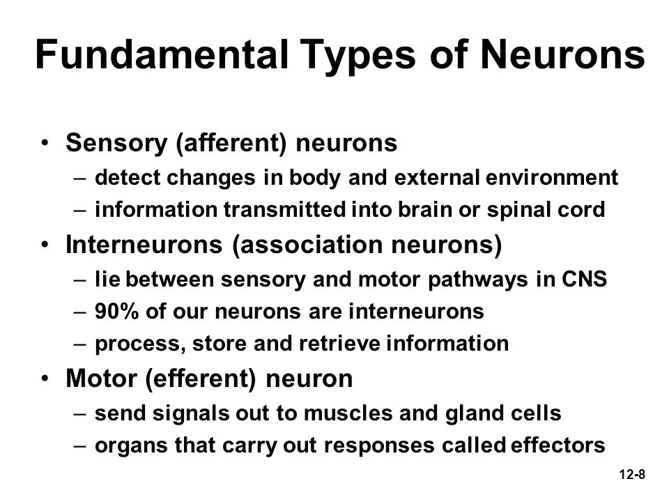12-9 Fundamental Types of Neurons