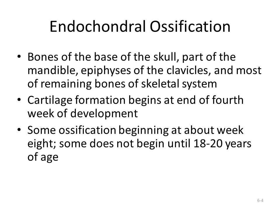 "Presentation ""6-1 Bone Development (during fetal development ..."