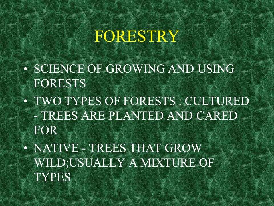FORESTRY SCIENCE OF GROWING AND USING FORESTS TWO TYPES OF FORESTS : CULTURED - TREES ARE PLANTED AND CARED FOR NATIVE - TREES THAT GROW WILD;USUALLY