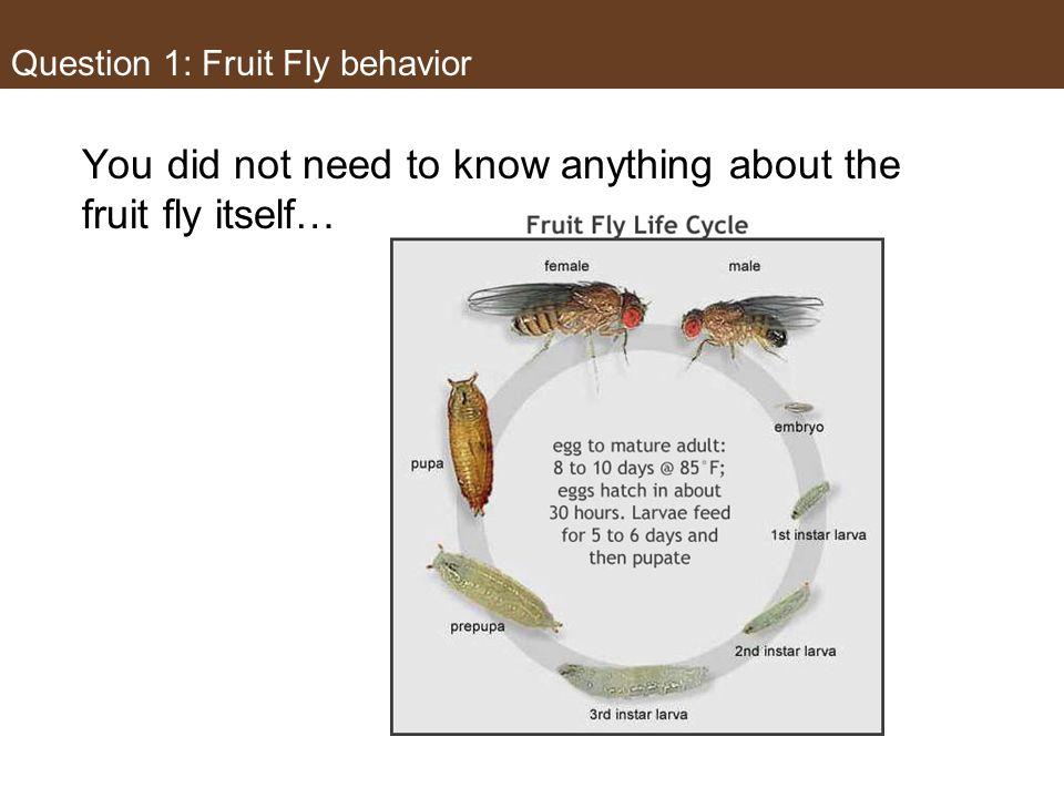 Fruit Fly Drospholia melangaster Question 1: Fruit Fly behavior
