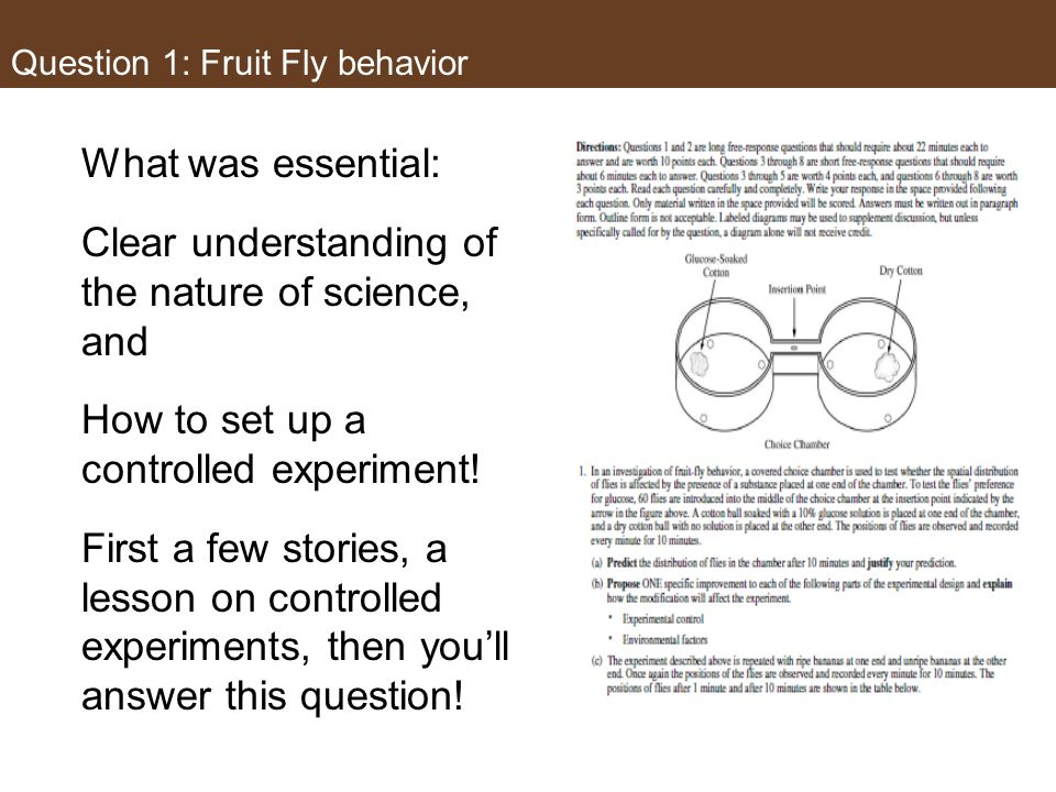 Question 1: Fruit Fly behavior..except their size and affinity for sugary solutions. But even without these two facts, it could be answered!
